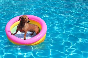 Swimming Pool Safety for dog