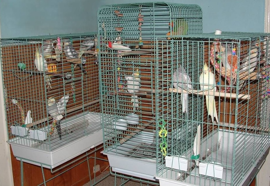 Cage for Cockatiel